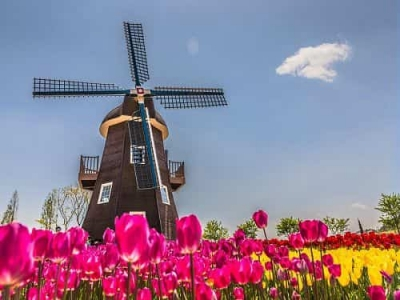 Top Student Cities and Universities to Study in Netherlands