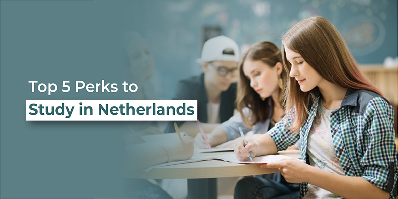 Top 5 perks to study in netherlands
